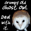 Grumpy Old Ghost Owl